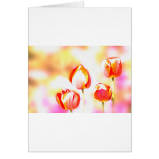 High  Key Red Tulip Quartet Card