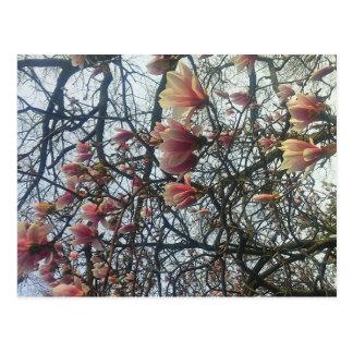 High Park, Toronto Ontario Cherry Blossom 2016 Postcard