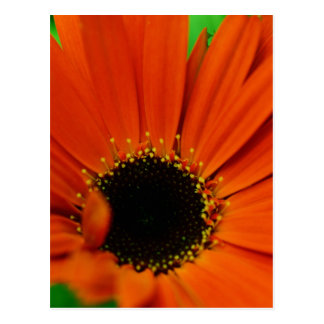 High Quality Floral Photo Postcard