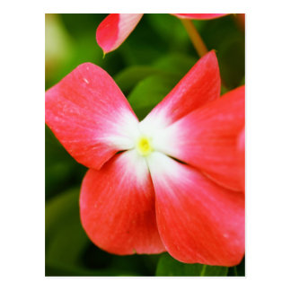 High Quality Floral Photo (Red Flower) Postcard