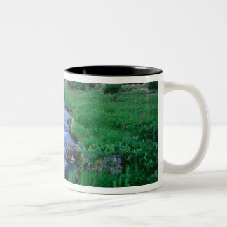 HIGH UINTAS WILDERNESS, UTAH. Stillwater Fork Coffee Mug