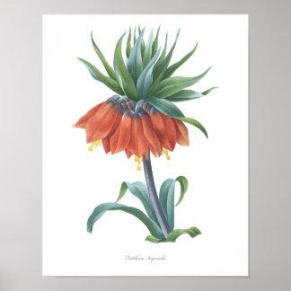 HIGHEST QUALITY Botanical print of Fritillaria