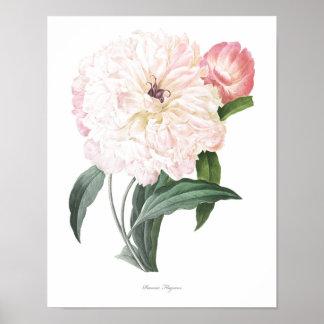 HIGHEST QUALITY Botanical print of Peony