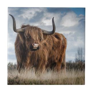 Highland Bull Tile