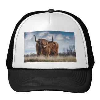 Highland Bull Trucker Hat