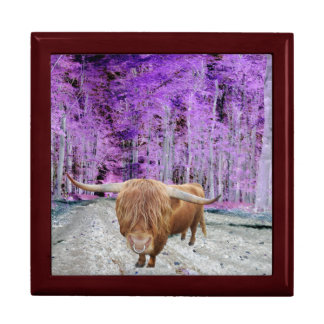 Highland cattle gift box