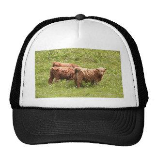 Highland cattle, Scotland Trucker Hat