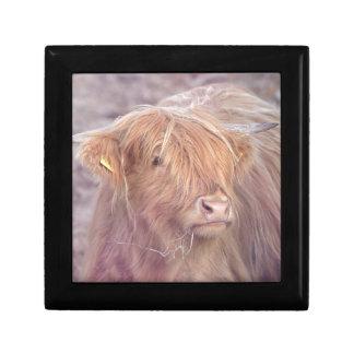 Highland Cow, Highland Cattle Gift Box