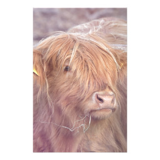 Highland Cow, Highland Cattle Stationery