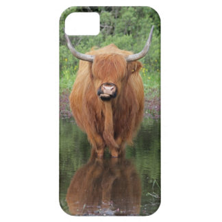 Highland cow iPhone 5 case