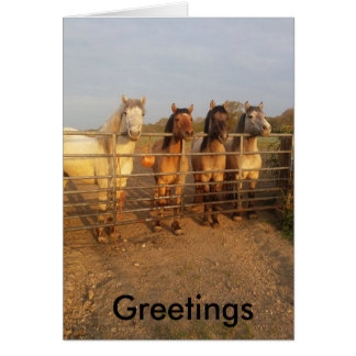 Highland pony Greetings Card