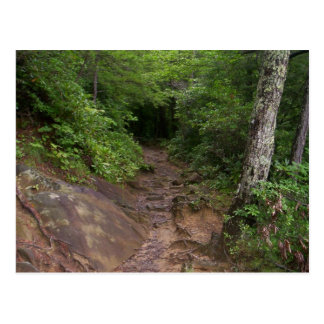 Hiking in the Great Smoky Mountains Postcard
