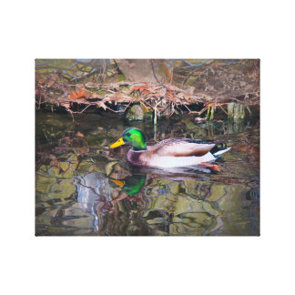 Hillcrest Duck on Canvas