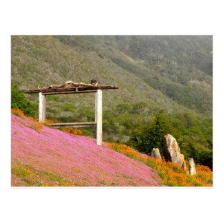 Hillside Flowers Postcard