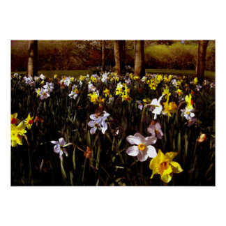 Hillside Flowers Poster by David Cameron