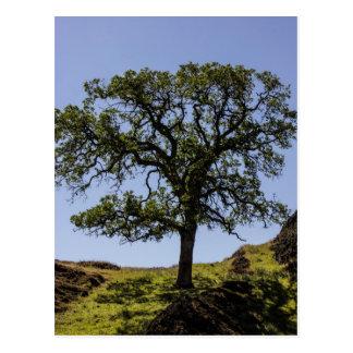 Hillside tree postcard