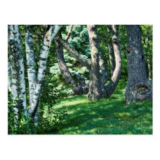 Hillside Trees Postcard