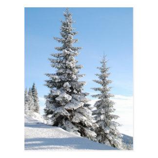 Hilltop trees postcard