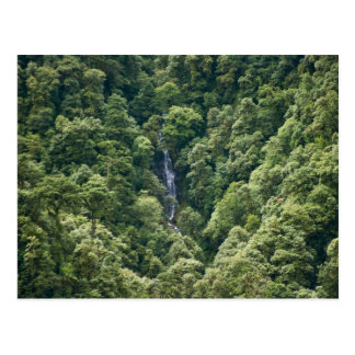 Himalaya forest in the Mangdue valley, Bhutan Post Card