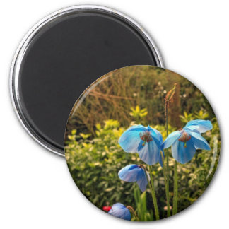 himalayan blue poppy magnet