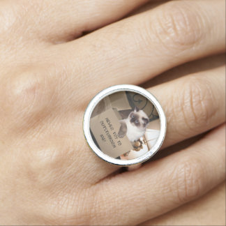 Himalayan Cat in Box Rings