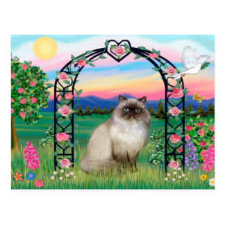 Himalayan Cat - Rose Arbor Postcard