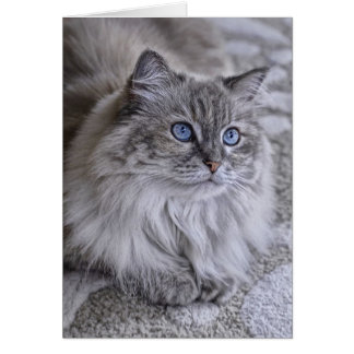Himalayan Rescue Cat Sophie Card