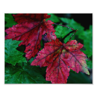 Hint of Autumn Photographic Print