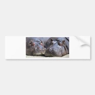 Hippo-78352 Bumper Sticker
