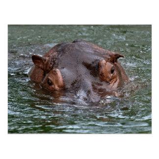 Hippo 8879 postcard