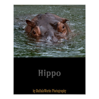 Hippo 8879 poster
