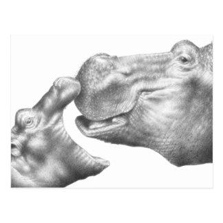 Hippo & Calf Postcard