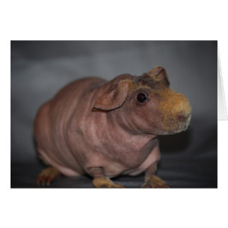 Hippo? Card