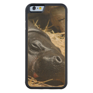 Hippo Carved® Maple iPhone 6 Bumper