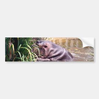 Hippo_Climb,_ Bumper Sticker