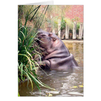 Hippo_Determination,_ Card