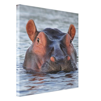 Hippo in water canvas print