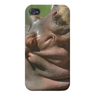 Hippo iPhone Case iPhone 4/4S Case