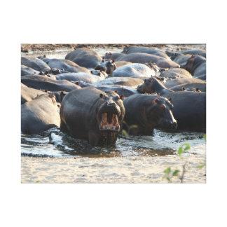 Hippo Pool in Tanzania Canvas Print