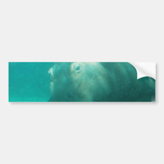 Hippo Under Water Bumper Sticker