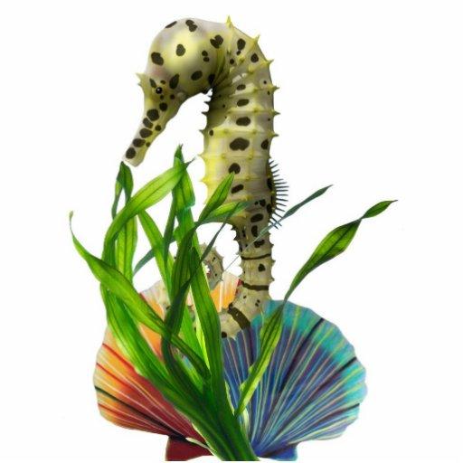 Hippocampe avec l'aimant d'algue découpages en acrylique