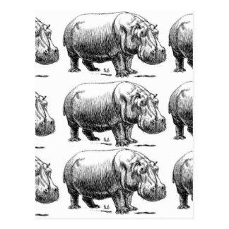 hippopotamus gold postcard