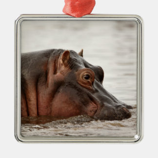 Hippopotamus, Hippopotamus amphibius, Lake Silver-Colored Square Ornament