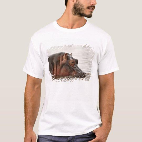 Hippopotamus, Hippopotamus amphibius, Lake T-Shirt
