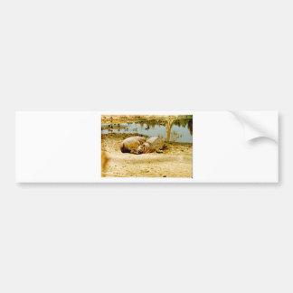 Hippos Bumper Sticker