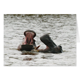 Hippos fooling around. card
