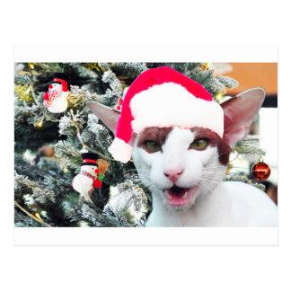 Hissing Cat in a Santa Hat Postcard