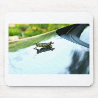 hitch hiking grasshopper mouse pad