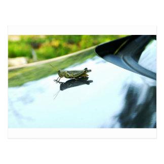 hitch hiking grasshopper postcard