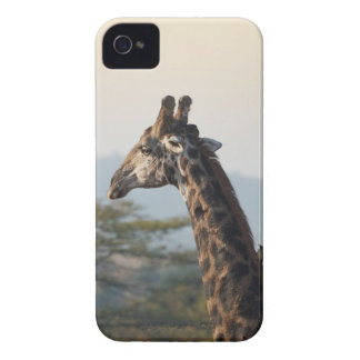 Hitching a ride on a giraffe iPhone 4 cases